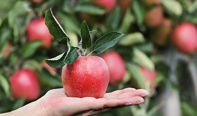 Manger des pommes permet-il de couper sa faim ?